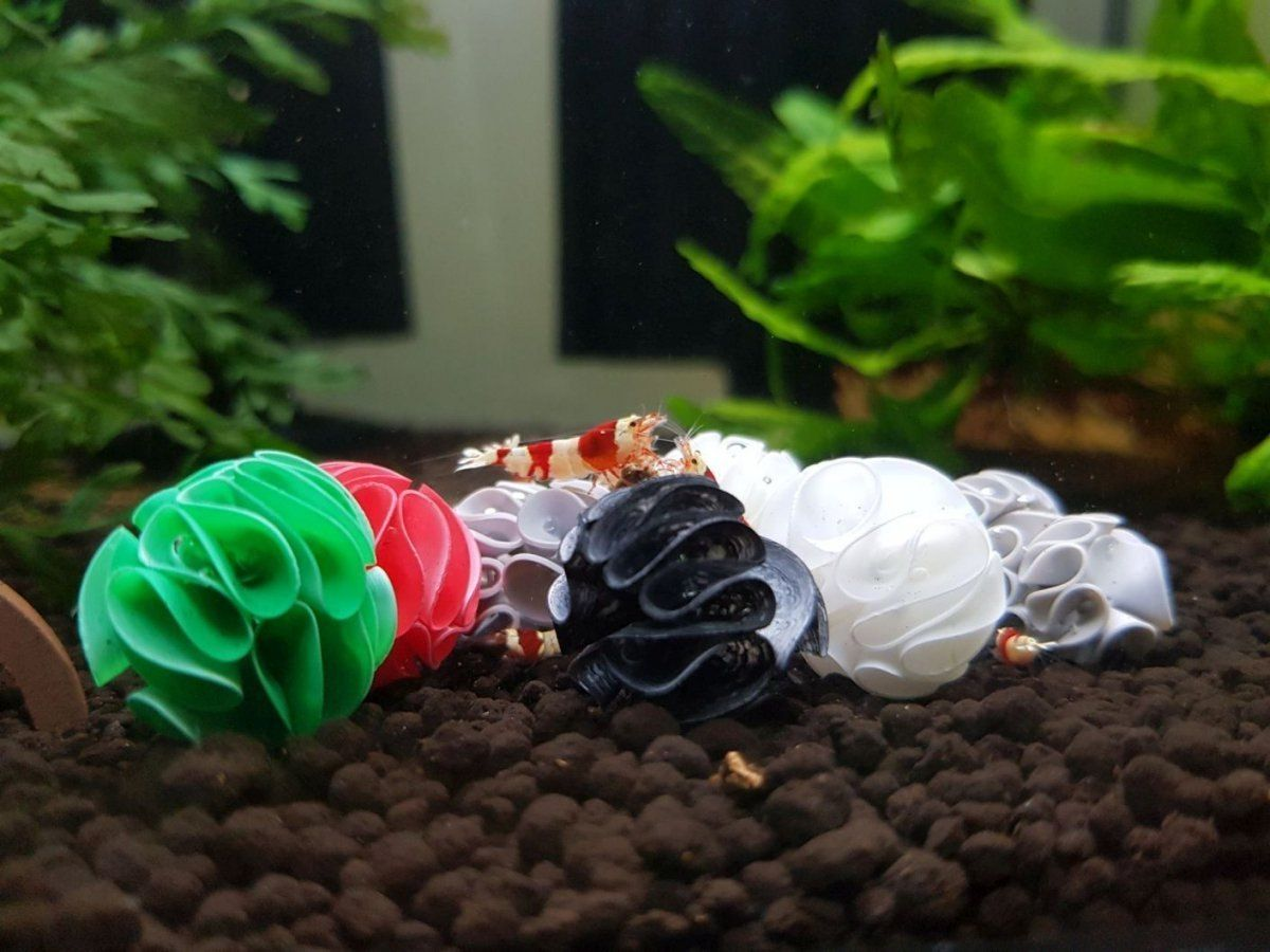 Baby Bee Shrimp Shelter - Red